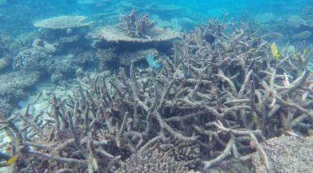 Global warming endangering Great Barrier Reef