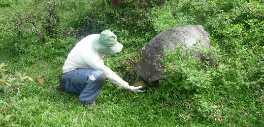 Tortoise poo highlights the need to conserve parasite communities as well as their hosts