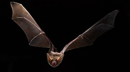 Unlocking a molecular secret behind bat longevity