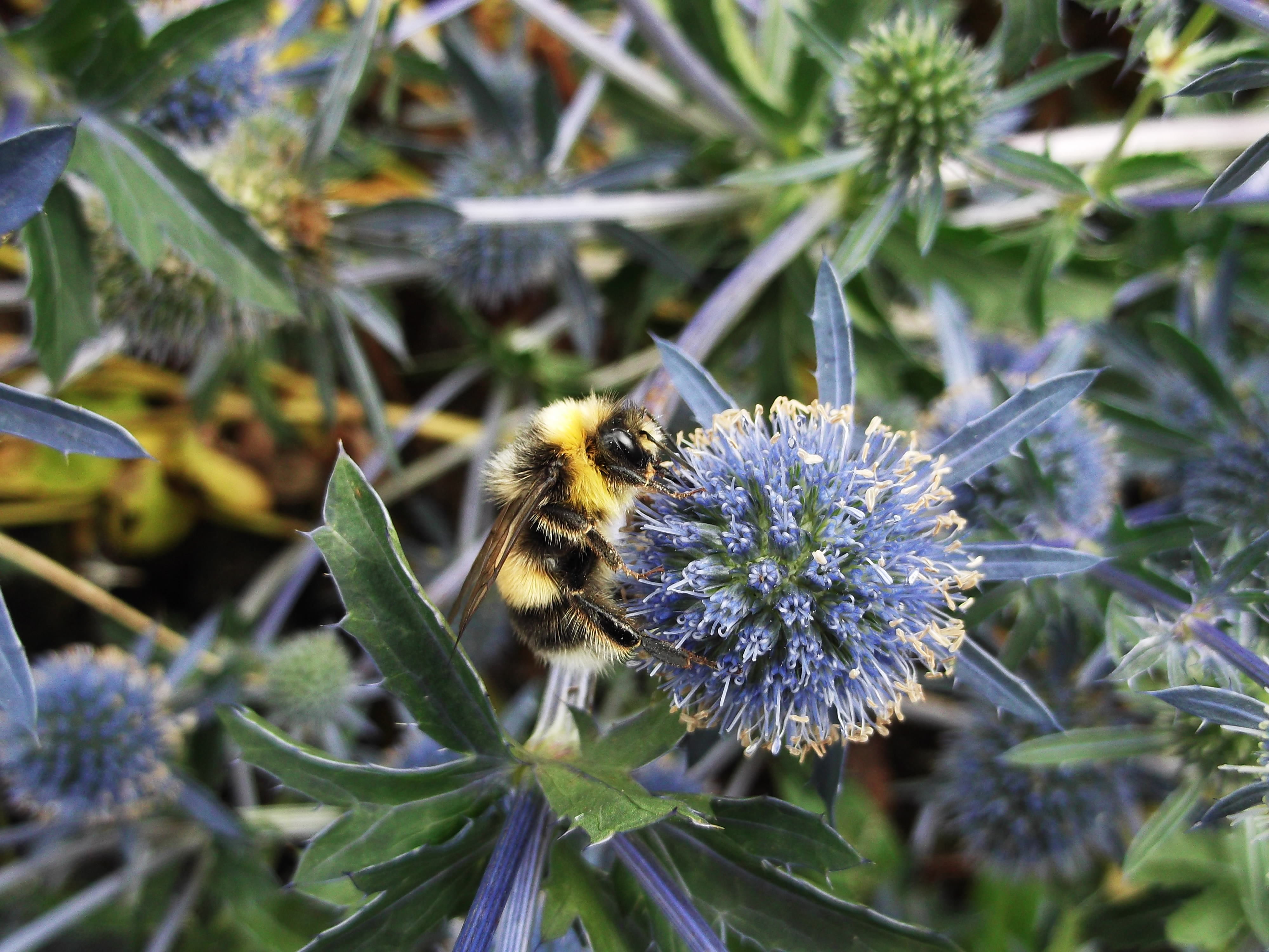 Cities could play key role in pollinator conservation