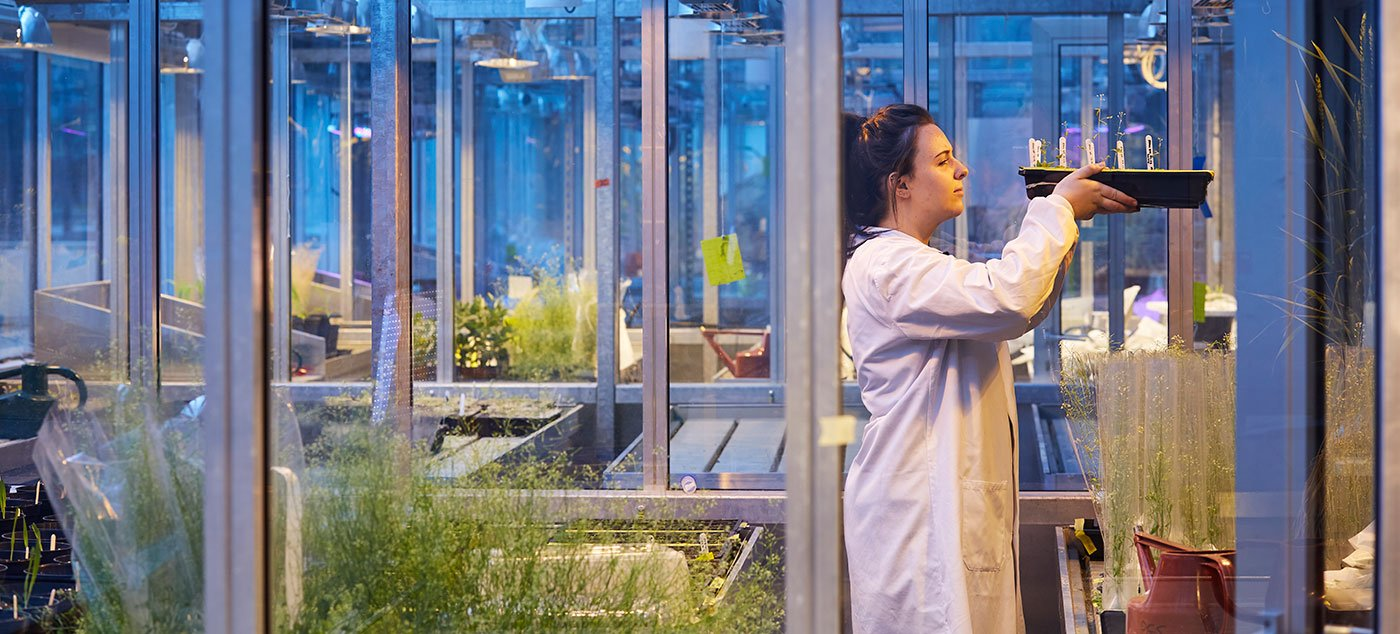 Plant growth suite at the University of Leeds
